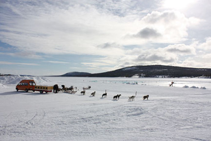 Dog sledding near Kiruna