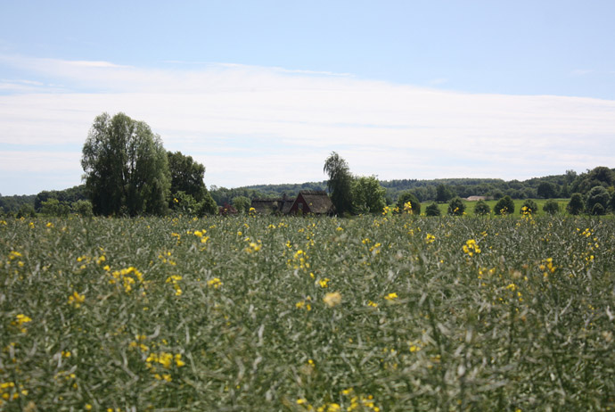 Fields near Lund, Sweden