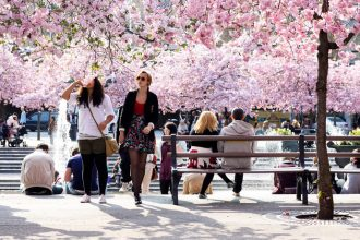 Where to see cherry blossoms in Sweden