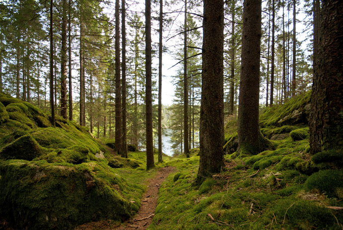 Swedish forests can be explored by backpacking tourists