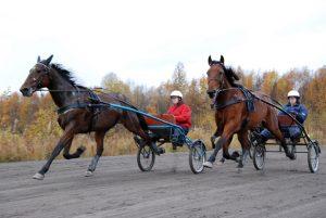 Olympiatravet, Gothenburg @ Gothenburg | Västra Götalands län | Sweden