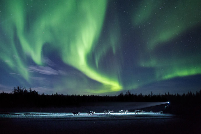 Northern lights dog sledding adventure in Sweden