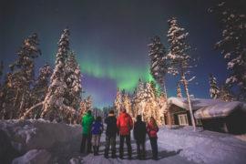 Northern lights wildlife tour in Swedish Lapland
