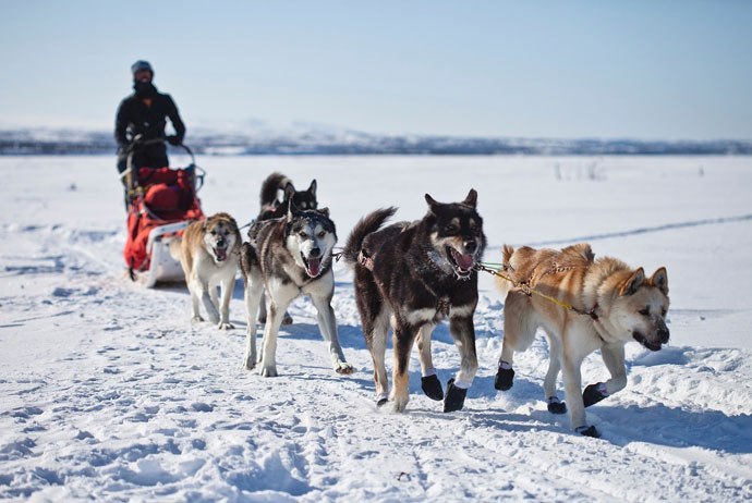 Husky tour in Sweden