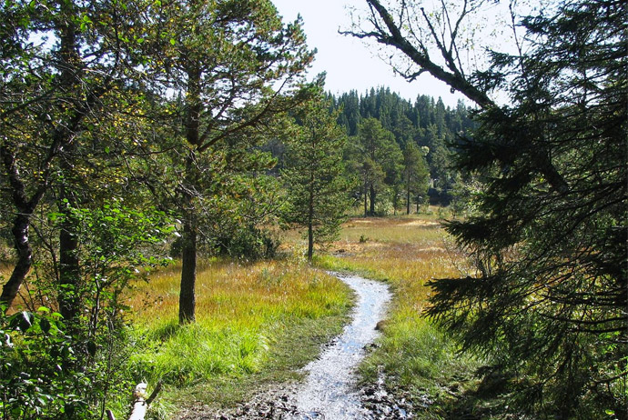 Walking is a great budget activity in Trondheim