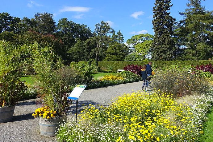 Butterlies flock to Stockholm's Bergius Botanical Garden in spring