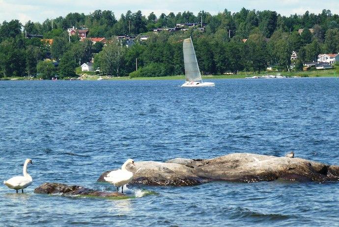 Swans at Lake Mälaren