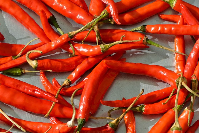 Chillis are the star at the Oslo Pepper Festival