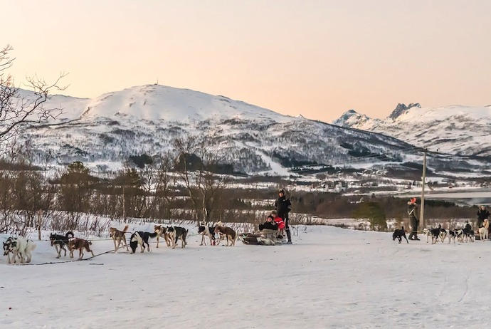 Dog-sledging, Norway