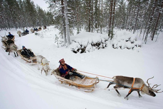 Reindeer sleigh ride in winter in Finland