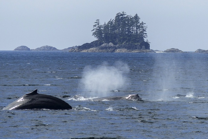 Norway is one of the best places in Europe to go on a whale safari