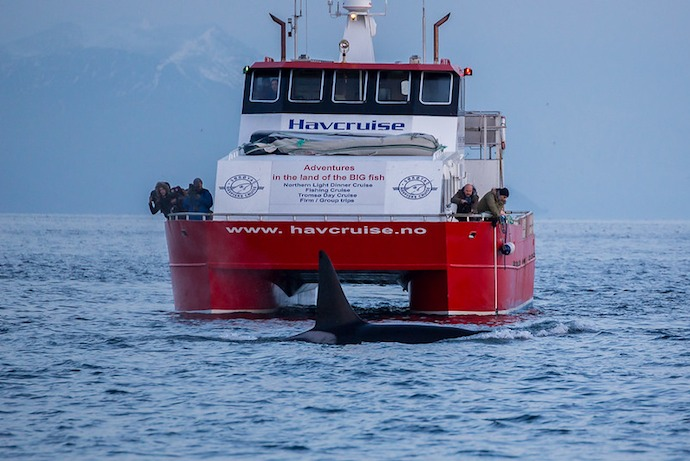 DO your research and pick an ethical whale safari in Norway