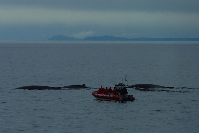 Whale-watching in Norway