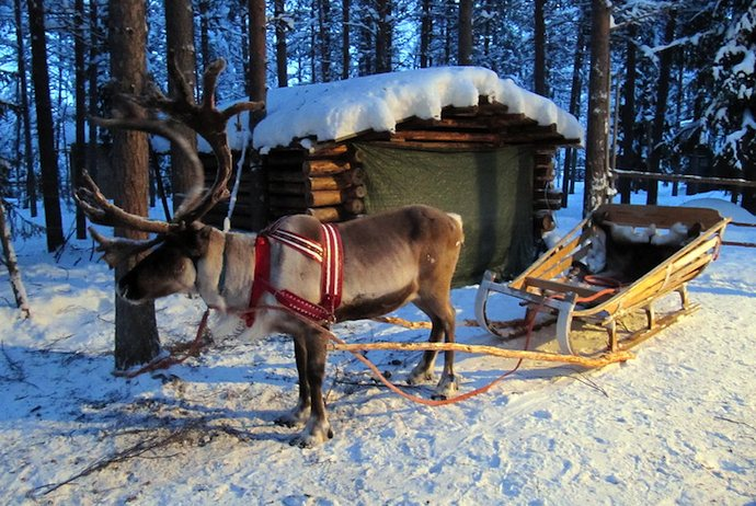 Spend Christmas in a Sami tent in the snow with a reindeer sleigh-ride