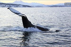 Polar Whale and Sea Bird Safari by Boat, Tromsø