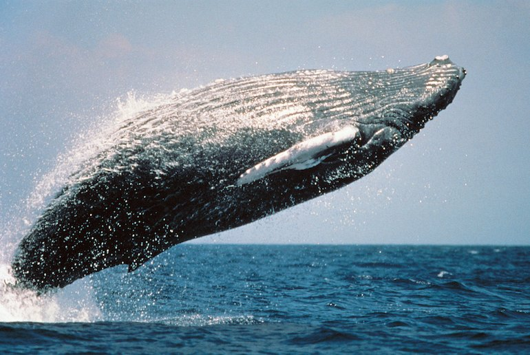Go whale-watching on a  wildlife tour in Norway