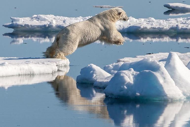Go polar bear spotting on a wildlife tour in Norway.