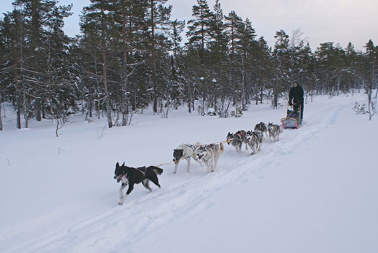 Go dog-sledding on a wildlife tour in Norway
