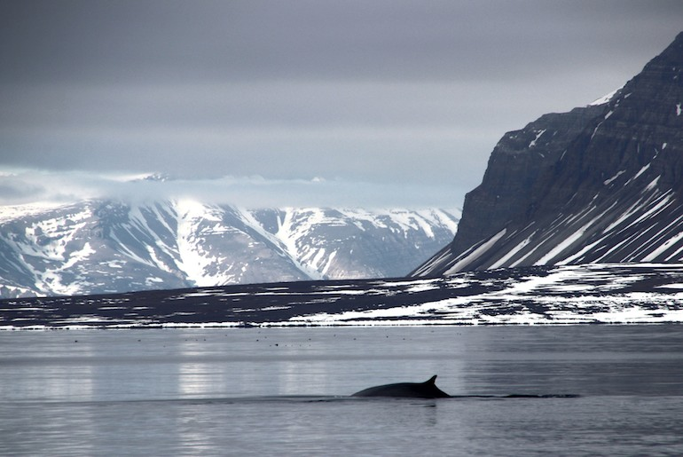 Fin whales can be seen in the Isfjord, one of Norway's 12 best fjords to visit.