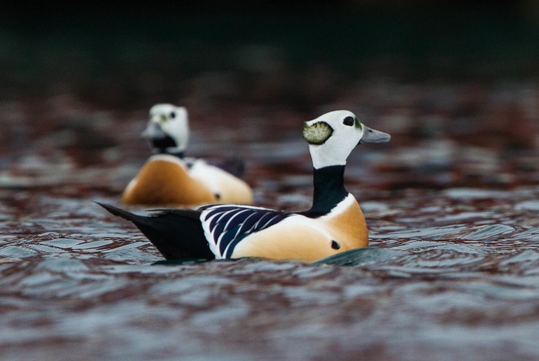 See wild sea birds on a wildlife tour in Norway
